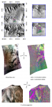Mono- and Polyhydrated Sulfates in Tithonium Chasma